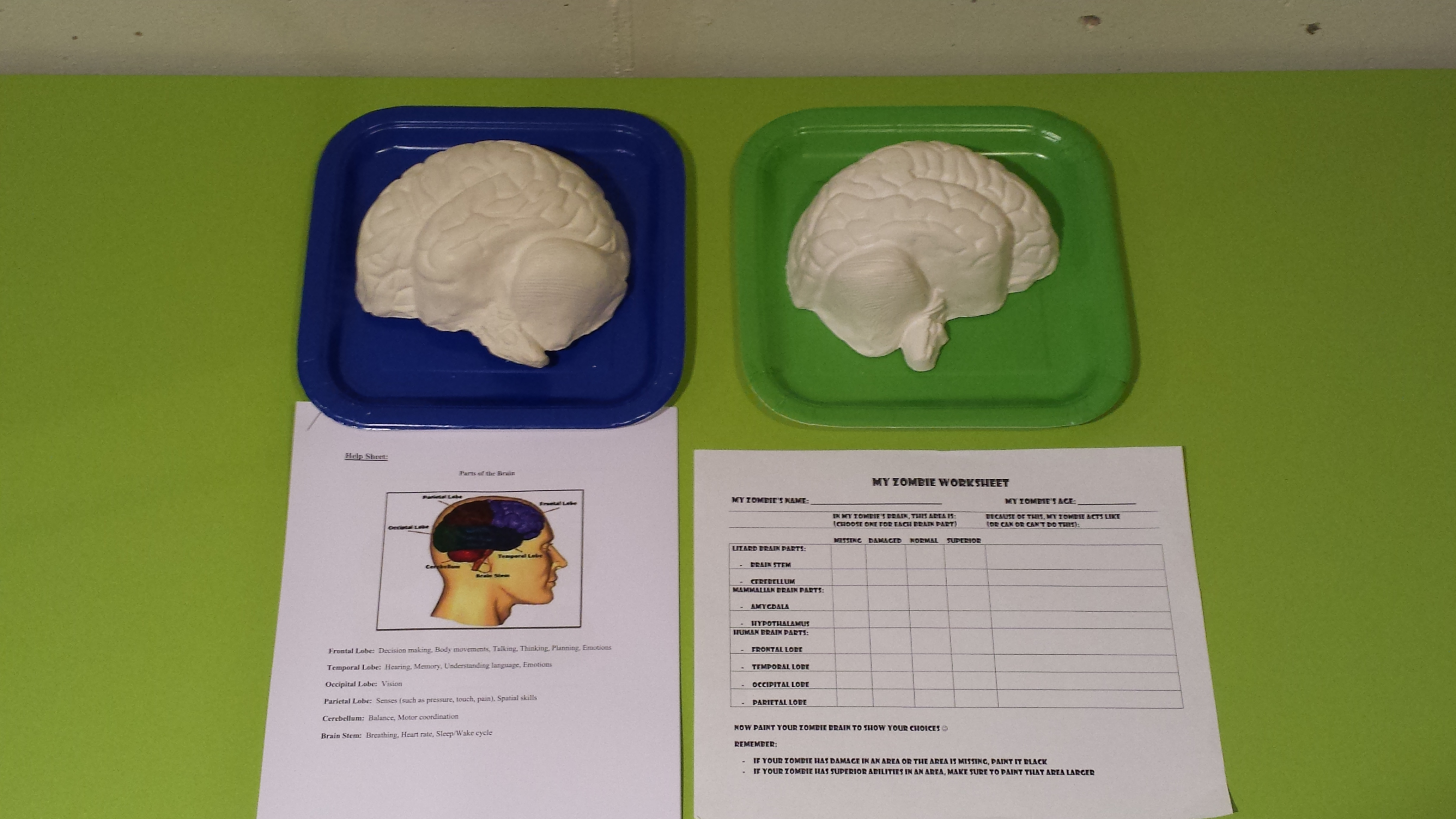 Society for the teaching of psychology exploring the human brain i have found that one of the most boredom inducing topics to cover when teaching introductory psychology or child development is the information on ccuart Gallery